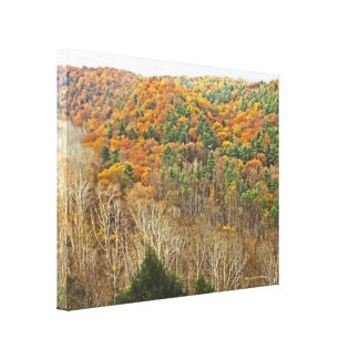 CLEAR FORK GORGE,MOHICAN MEMORIAL STATE FOREST CANVAS PRINT