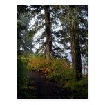 Clear Lake Hiking Trail Postcard