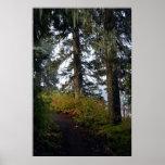 Clear Lake Hiking Trail Print