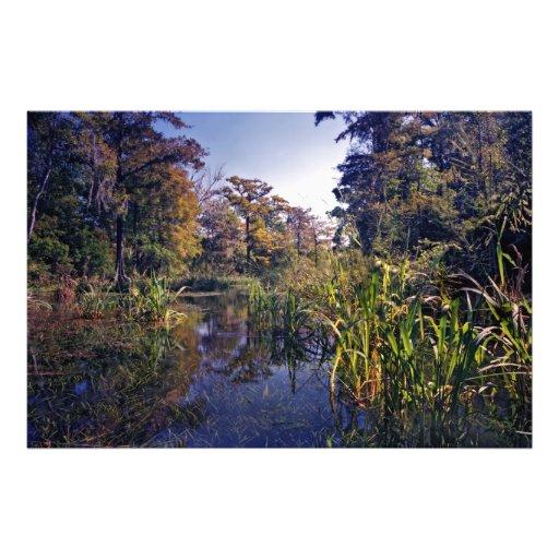 Clear Run. Wacissa Springs, Florida. Photo Art