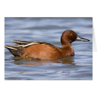 Clear Shot Of A Brown Cinnamon Teal Greeting Card