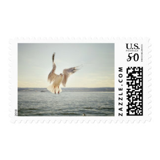 Clear Sky Clouds Flying Sea Gull Ocean Stamp
