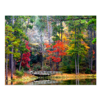 Clear Springs - Homochitto National Forest Postcard