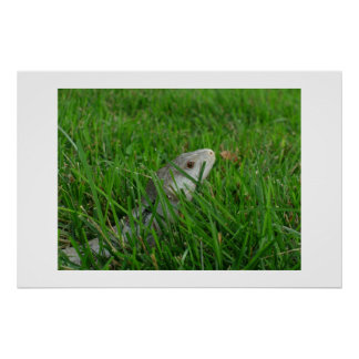 Clear Stream in Green Grass Poster