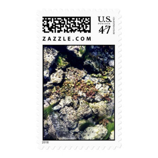 Clear Waters Postage