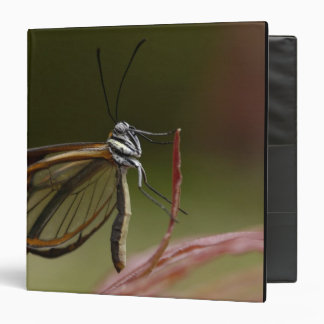 Clear-winged Butterfly Hyalurga sp ?) Cloud 2 3 Ring Binder