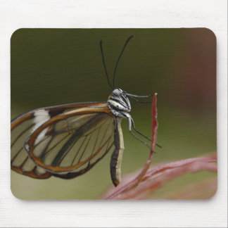 Clear-winged Butterfly Hyalurga sp ?) Cloud 2 Mouse Pad