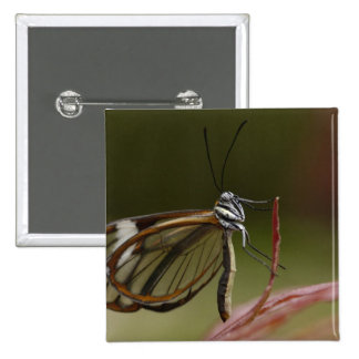 Clear-winged Butterfly Hyalurga sp ?) Cloud 2 Pinback Button
