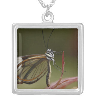 Clear-winged Butterfly Hyalurga sp ?) Cloud 2 Silver Plated Necklace