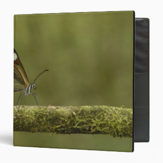 Clear-winged Butterfly Hyalurga sp ?) Cloud 3 Ring Binder