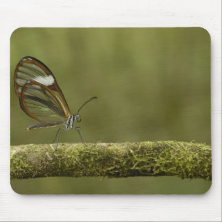 Clear-winged Butterfly Hyalurga sp ?) Cloud Mouse Pad