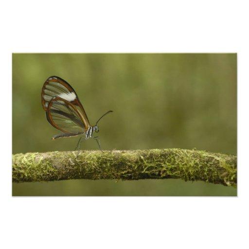 Clear-winged Butterfly Hyalurga sp ?) Cloud Photo Art