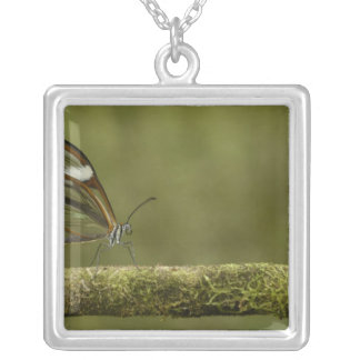 Clear-winged Butterfly Hyalurga sp ?) Cloud Silver Plated Necklace