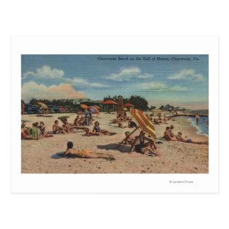 Clearwater, FL - Sunbathers on Clearwater Beach Postcard