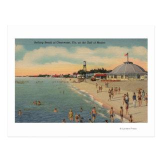 Clearwater, FL - Swimmers & Sunbathers on Beach Postcard