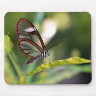 Clearwing Butterfly Mouse Pad
