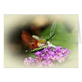 Clearwing Hawk Moth - Hemaris thysbe Card