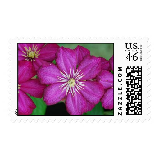 Clemantis Postage Stamps