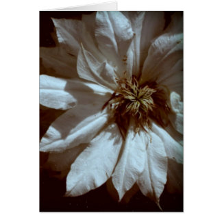 Clematis 3 Floral Photography Sympathy Cards