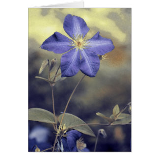 Clematis ~ A Note Card by KNairn