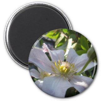 Clematis blanco II Imán Redondo 5 Cm