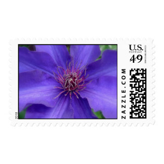 Clematis Bloom Postage