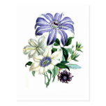 Clematis by Jane Loudon Postcard