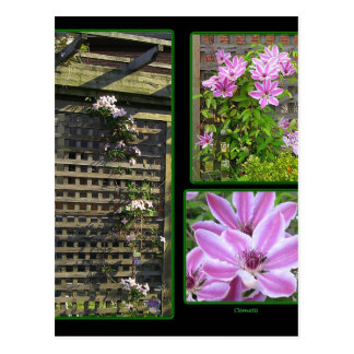 Clematis Collage Postcard