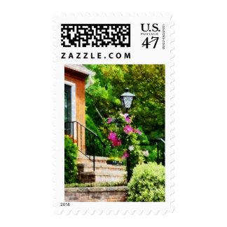 Clematis en el poste de la lámpara sellos