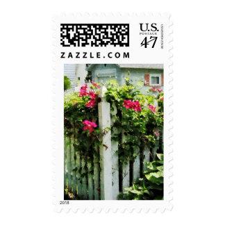 Clematis en la cerca timbre postal