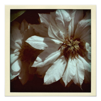 """Clematis Floral Photography 2 Funeral Announcement 5.25"""" Square Invitation Card"""