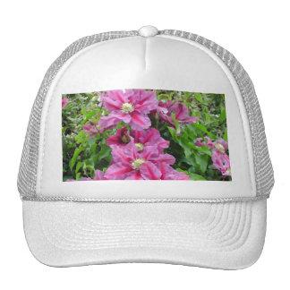 Clematis. Flores púrpuras rosadas. Femenino Gorras De Camionero