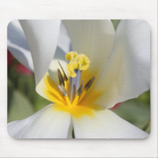 Clematis Flower Mouse Mat Mouse Pad