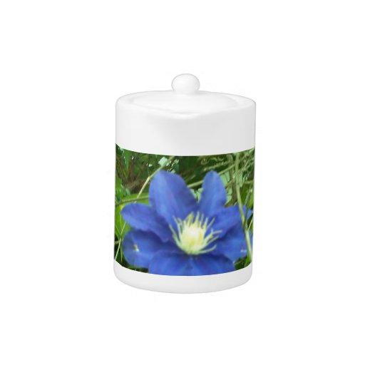 clematis flower purple