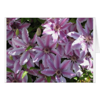 Clematis Flowers Card