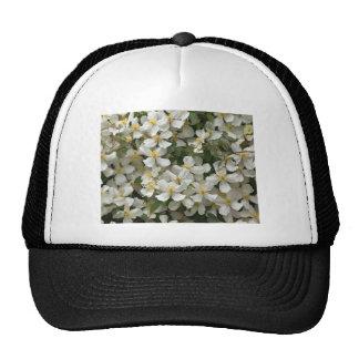Clematis Hat