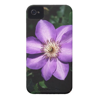 Clematis Hybrid iPhone 4 Case