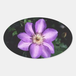 Clematis Hybrid Oval Sticker
