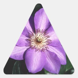 Clematis Hybrid Triangle Sticker