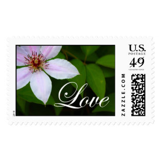 Clematis Love Stamps