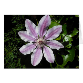 Clematis Nellie Moser Card