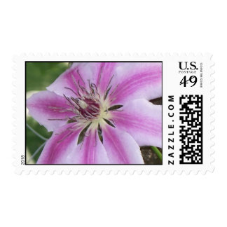 Clematis Nelly Moser Stamp
