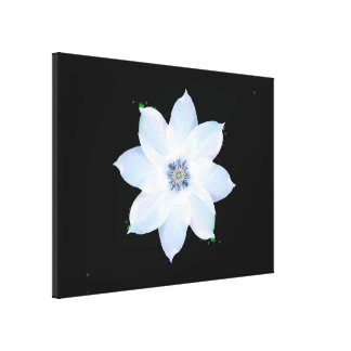 Clematis on black canvas print