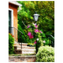 Clematis on Lamp Post shirt
