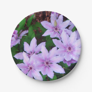 *Clematis* Paper Plates