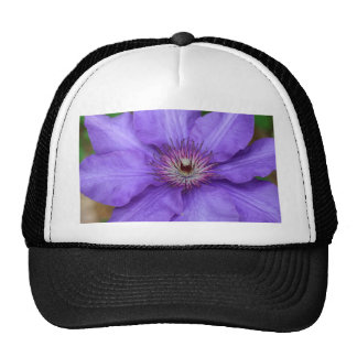 Clematis photographed by Tutti Trucker Hat