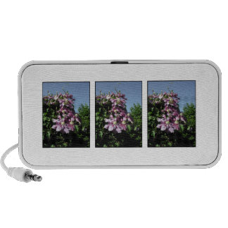 Clematis. Pink Flowers, and blue sky. Travel Speakers