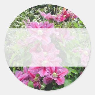 Clematis. Pinky Purple Flowers. Feminine. Classic Round Sticker