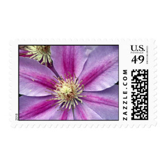 clematis stamps