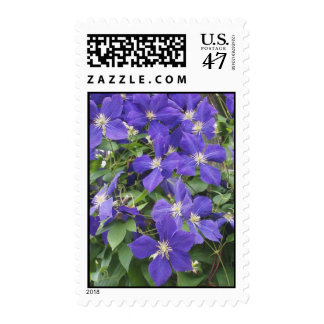 CLEMATIS POSTAGE STAMP